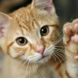 Cute ginger kitten with his paw raised...