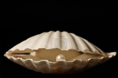 Scallop with Pearl