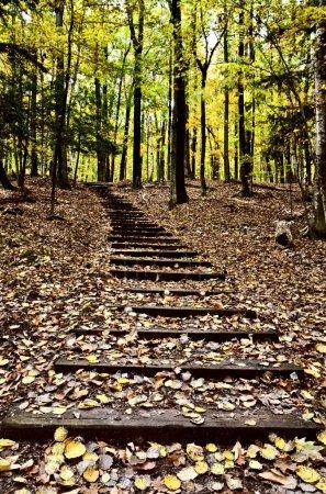 Photo pour Escaliers en bois dans la forêt Sturgeon Bay Wisconsin Potawatomi State Park - image libre de droit