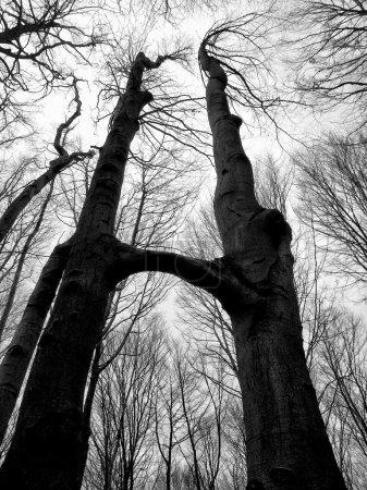 Photo pour Arbre combiné haut dans la forêt - image libre de droit