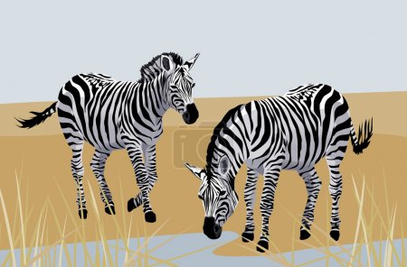 Illustration for Background with zebras in savanna - Royalty Free Image