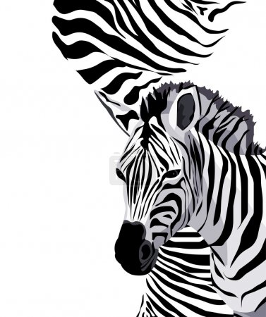Illustration for Illustration of zebras with space for text - Royalty Free Image