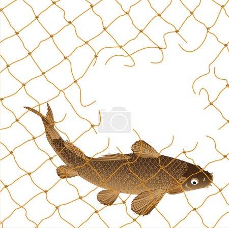 Carp and nets