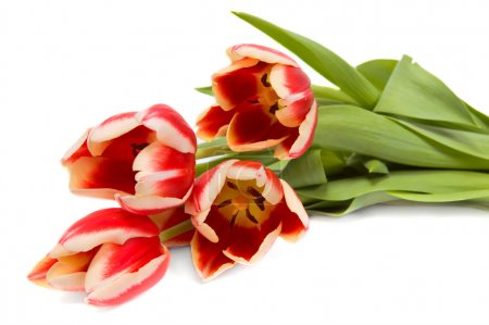 Photo for Tulips bouquet on white background - Royalty Free Image