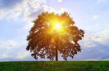 Photo pour Un arbre isolé avec effet de lumière du soleil. - image libre de droit
