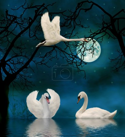 Swans in the moonlight on a lake