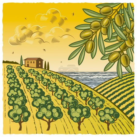 Illustration for Retro landscape with olive grove in woodcut style. Vector illustration with clipping mask. - Royalty Free Image