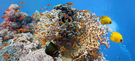Photo for Coral scene - panorama with shoal of fish - Royalty Free Image