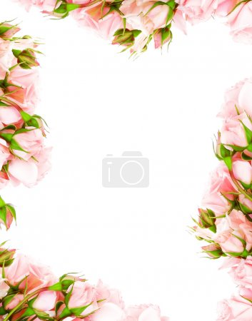 Photo for Fresh pink roses frame border isolated on white background - Royalty Free Image
