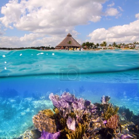 Coral reef in Mayan Riviera Cancun Mexico