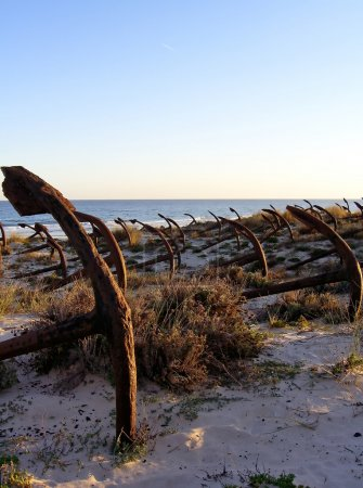 Photo for Cemetery of old anchors on a beach dune. - Royalty Free Image
