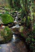Slice of nature freshness