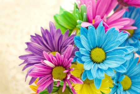 Photo for Colorful spring flowers on a beige background, horizontal with selective focus, copy space - Royalty Free Image
