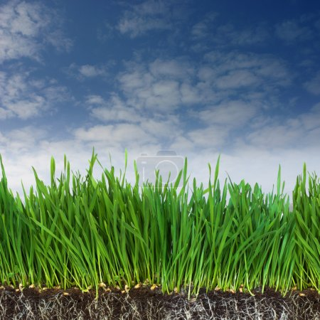 Photo for Green grass and dark soil with roots - Royalty Free Image